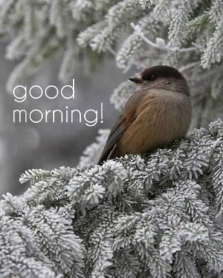 Morning-Bird-wg16518