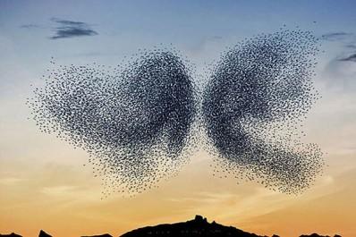 fotografia-bird-ballet