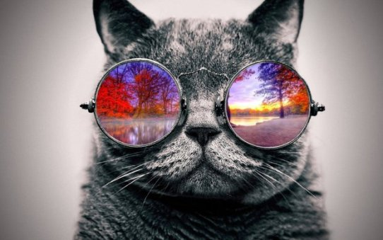 cool_cat__nature_by_tovalhalla-d95iyze