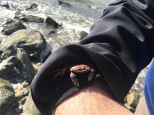 sand crab sunny