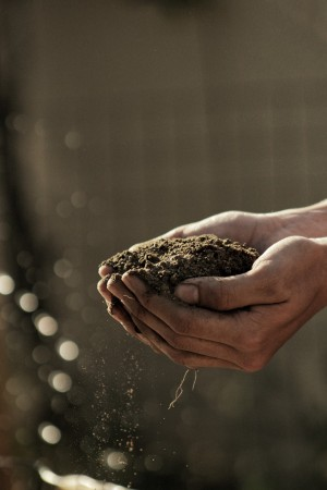 soil_dirt_hands_holding-1397972