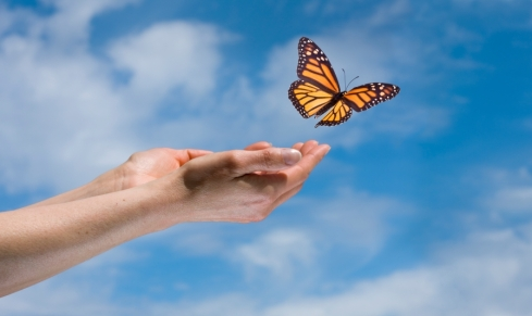 hands-and-butterfly