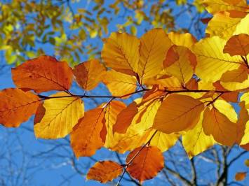 blue sky fall leaves