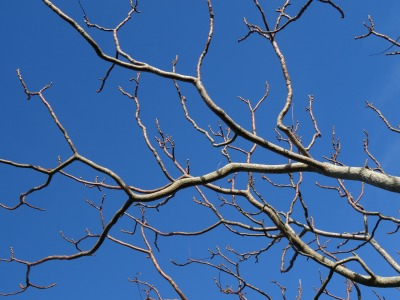 bare branches against blue sky