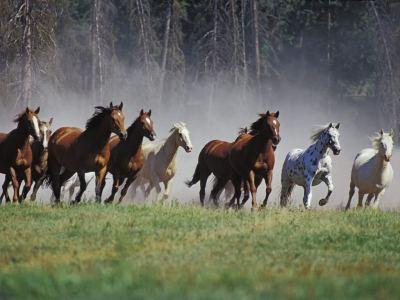 homecoming wild horses