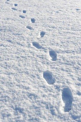 snowflakes footprints