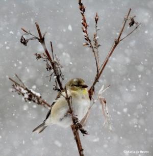 bird in the snow