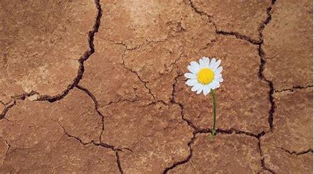 perseverance daisy
