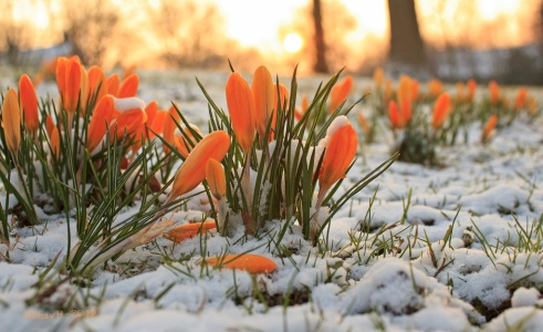 march poetry flowers in snow