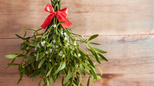 mistletoe dec 2019 How-mistletoe-became-an-icon-of-Christmas-730x410