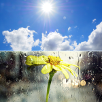 sun and rain flower